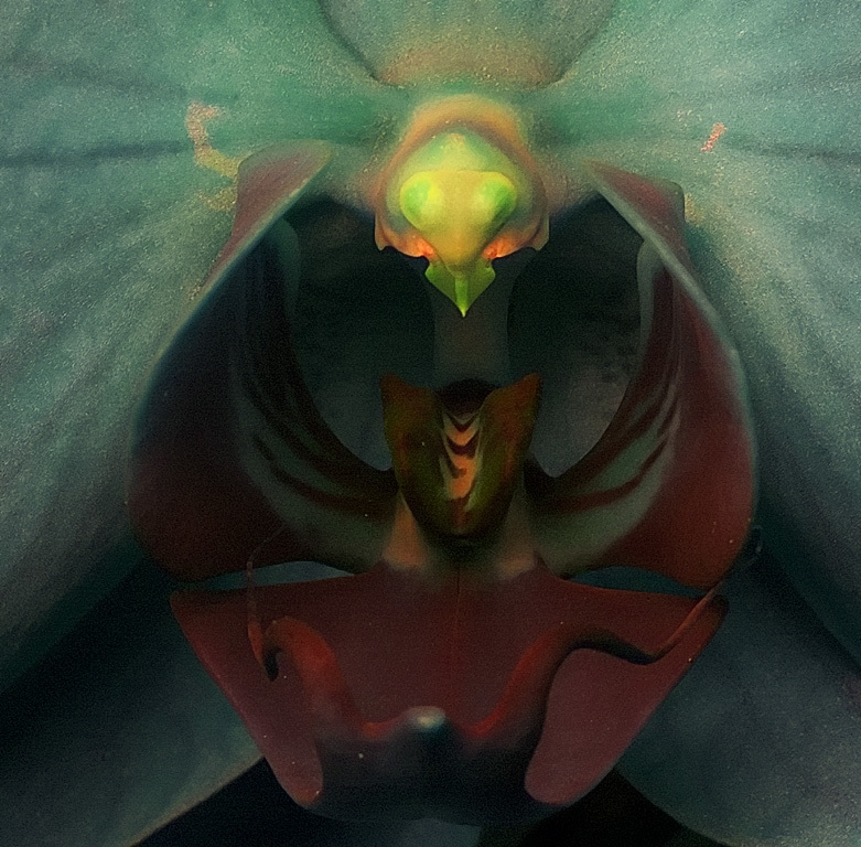 Ultraviolet Moth Orchid, by D70
